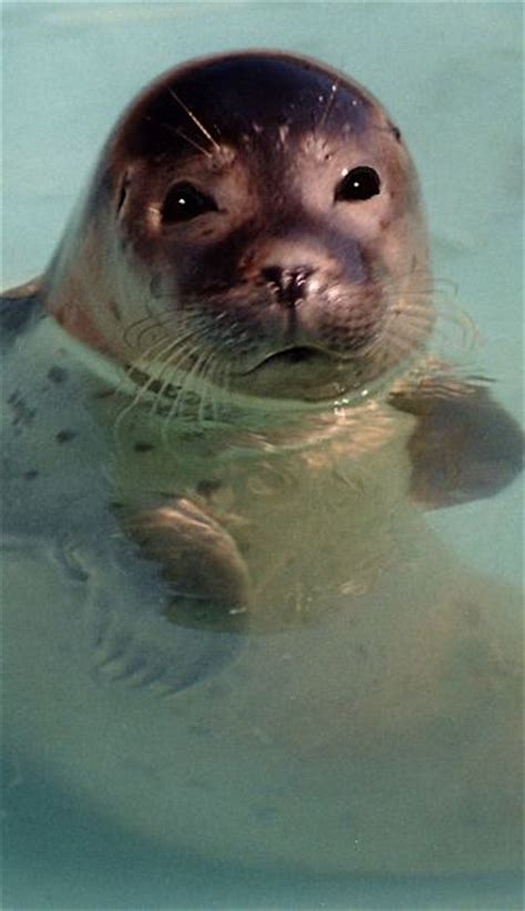 Seal Facts - Animal Facts Encyclopedia
