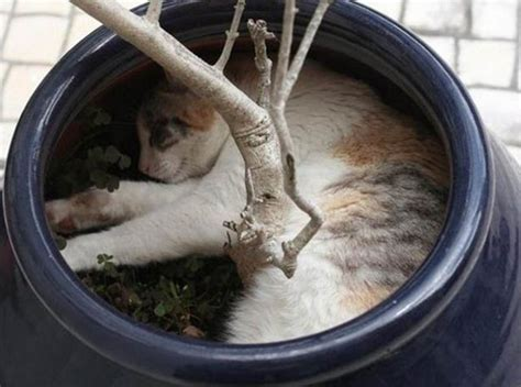 7 Cats Caught Sleeping In Strange Places - Meow Aum!