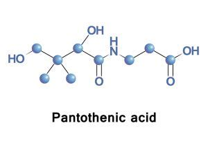 Pantothenic acid sources, health benefits and uses
