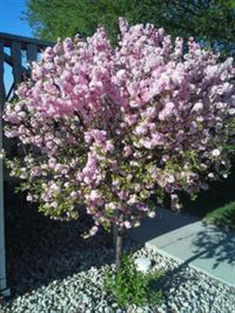 Ornamental Trees | Spring Tree Farm Innisfil