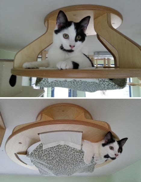 Modular Kitty Playground Gives Cats a Whole Room of Fun