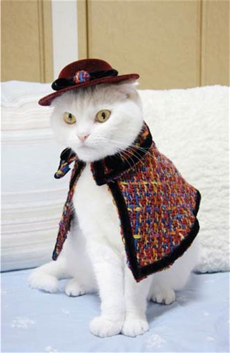 Japanese Cat Fashion, a Book Full of Outfits for Cats